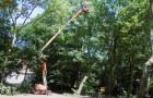 snoeien en vellen van bomen